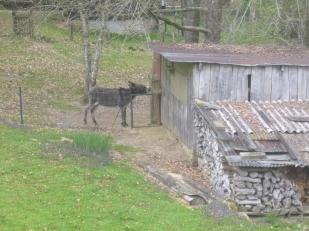 Un we à la campagne (animaux) (1)