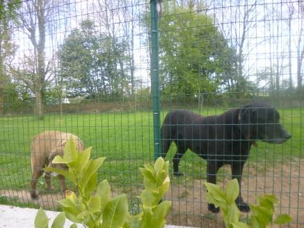 Un we à la campagne (animaux) (12)
